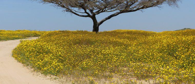החזון של מתן דהן מול החזון בן גוריון: פיתוח הפריפריה בישראל